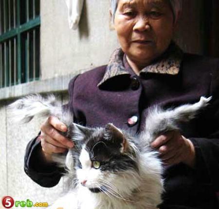 صورة قط ظهر فى الصين ليه جناحين .. (سبحان الله)