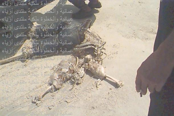 صورة لفتاة كويتية التهمها القرش ممنوع اصحاب القلوب الضعيفة انا