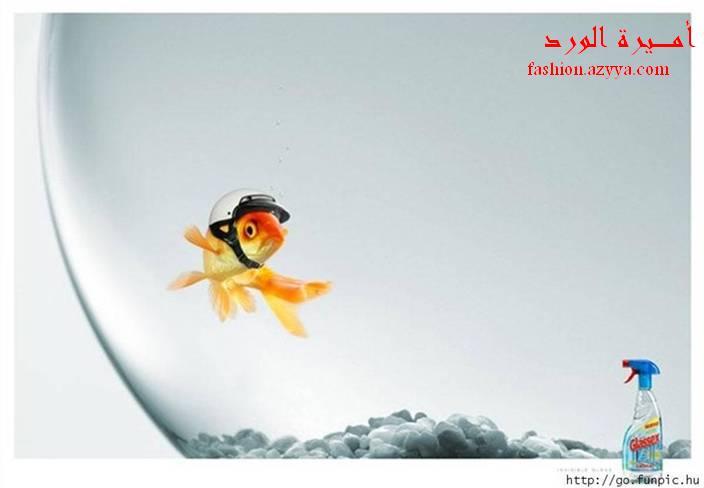 يلق كأنه قزازه ......................... دعاية ملمع الزجاج = السمكة لابسه