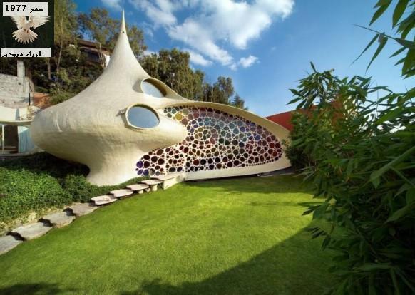 تصميم مميز وغريب لبيت يبدو مثل قصة اليس في بلاد