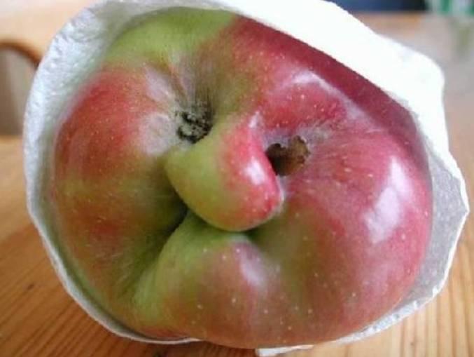 في صباها كالتفاحة فكيف ستكون إذا تقدم بها العمر؟ v