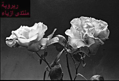 الاسود و الابيض،ديكورات ملكية 2013، ديكورات باللون الابيض2013اجمل الورود المتحركة2
