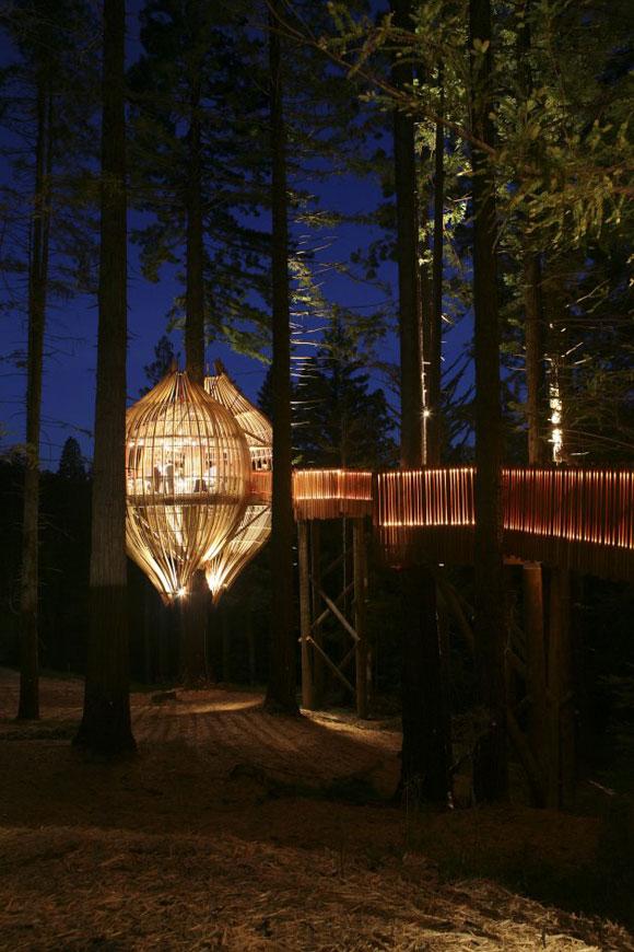 شجرة إلى المكتب المعماري Pacific Environments Architects ليكون جزءاً من