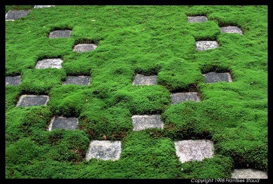 الحديقة بالاثاث الاسود الحديث لعام 2013حقائب وأحذية تودز «كوتور» ربيع