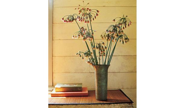في ديكور منزلكقصة رؤؤؤؤؤؤؤؤؤؤعةديكورات هندية رووووعةجلسات ارضية روووعة تنسيق الزهور...........روووووووووووو