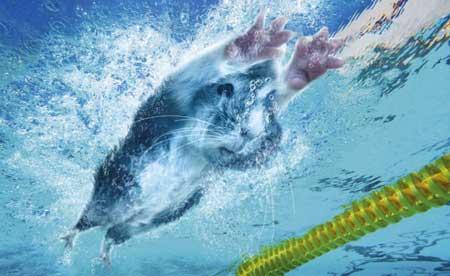 قبل حفل افتتاح الأوليمبياد يوم الجمعة المقبل. وهى تتنافس فى
