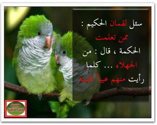رائعه اتمنى إن تنال على رضاكم ياحلوات اخليكم مع الصور