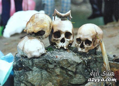 العظمية والتي قدر عددها بنحو 300 هيكل عظمي والتي انجرف