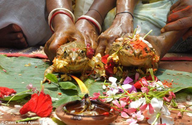 أخرى منها اقامة حفل زفاف كبير للضفادع . يؤمن سكان